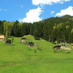 Ayder Plateau Blacksea Daily Tour 2